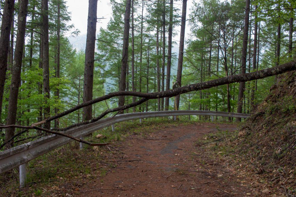 15:57 倒木。