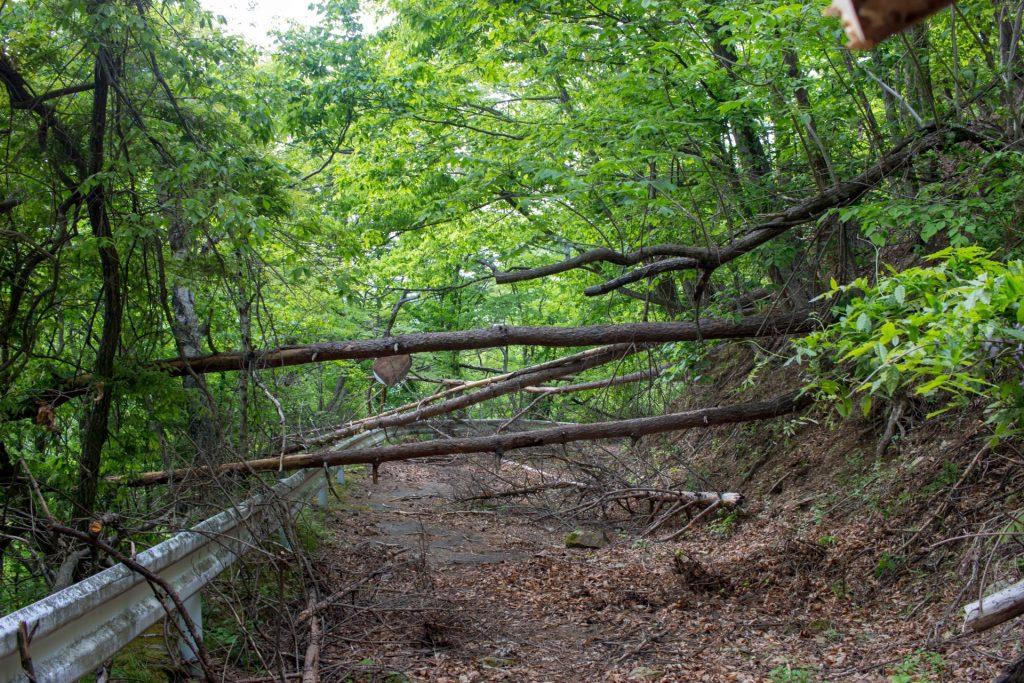 16:18 倒木と落石の連続。